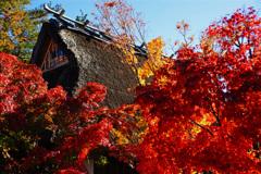 茅葺屋根のある紅葉風景...②