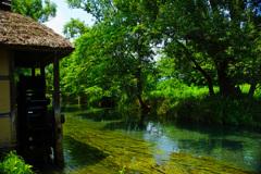 グリーンの清流と水車小屋 ①