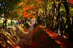 河口湖で紅葉狩り~もみじ回廊 ⑨