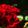 赤い君が一番好き…