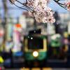 少しずつ散り行く桜にサヨナラを…