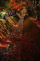 河口湖で紅葉狩り~もみじ回廊 ⑥