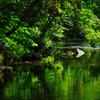 深緑を映す流れ…
