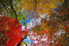 ツリーマジック~錦秋の空は美しい