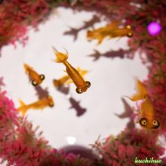 aquarium ~見られてる?Ⅱ~