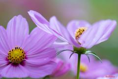 flower ~秋色2019~
