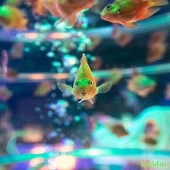 aquarium ~ぶさかわ~