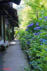 flower ~鎌倉散歩Ⅱ~