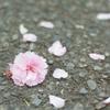 asphalt flower