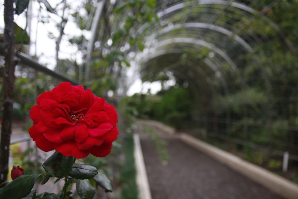 花 その1