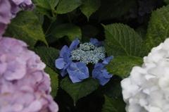 花 その10