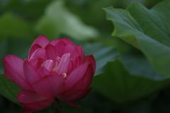 花 その111