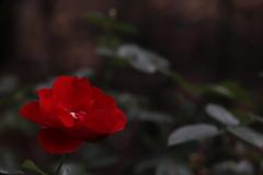 花 その160