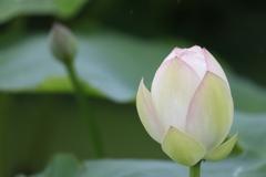 花 その195