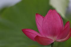花 その142