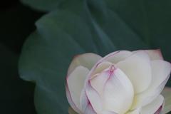 花 その149