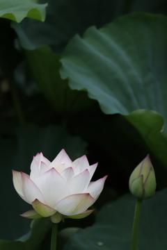花 その150
