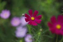 花 その97