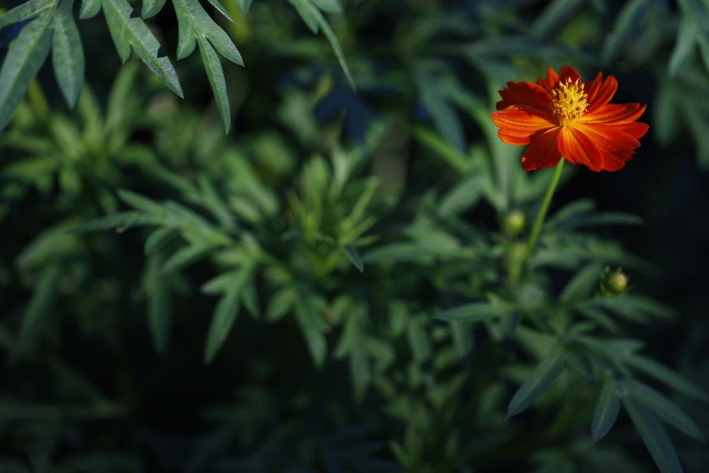 花 その206
