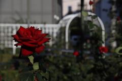 花 その122