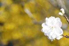 花 その70