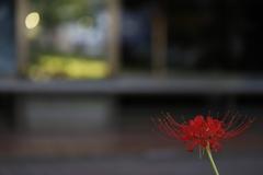 花 その92