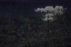 花 その203