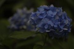 花 その113