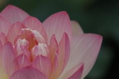 花 その187