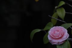 花 その131