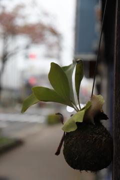 葉っぱ その14