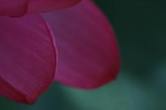 花 その145