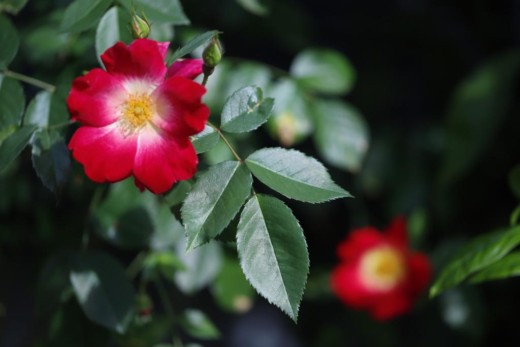 花 その105