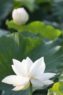 花 その89