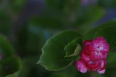 花 その200