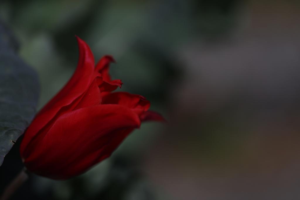 花 その177