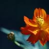 花 その155