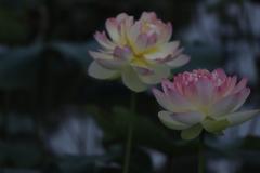 花 その188