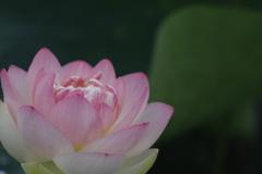 花 その189