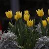 花 その132