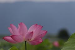 花 その84