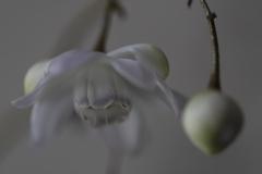 花 その153