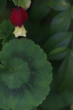 花 その106
