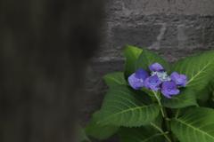 花 その110