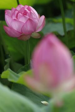花 その112