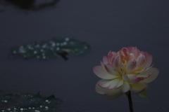 花 その186