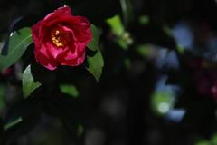 花 その162