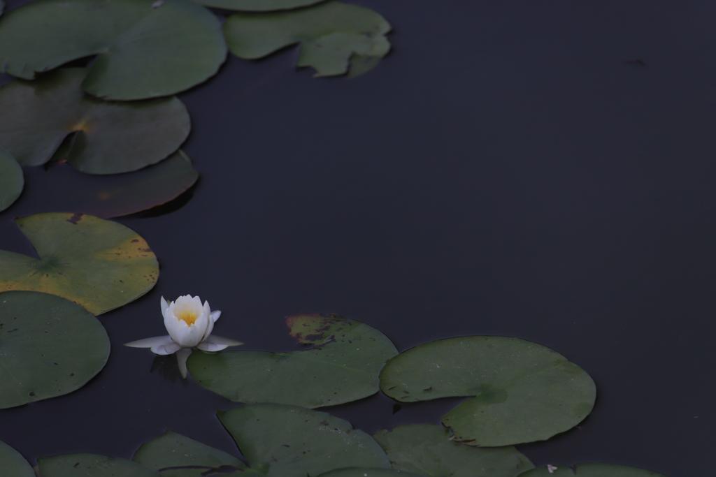 花 その202