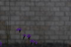 花 その183