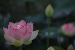 花 その191